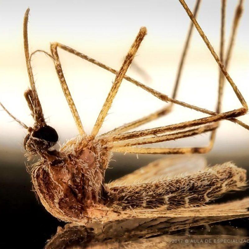 Focus_staking_mosquito