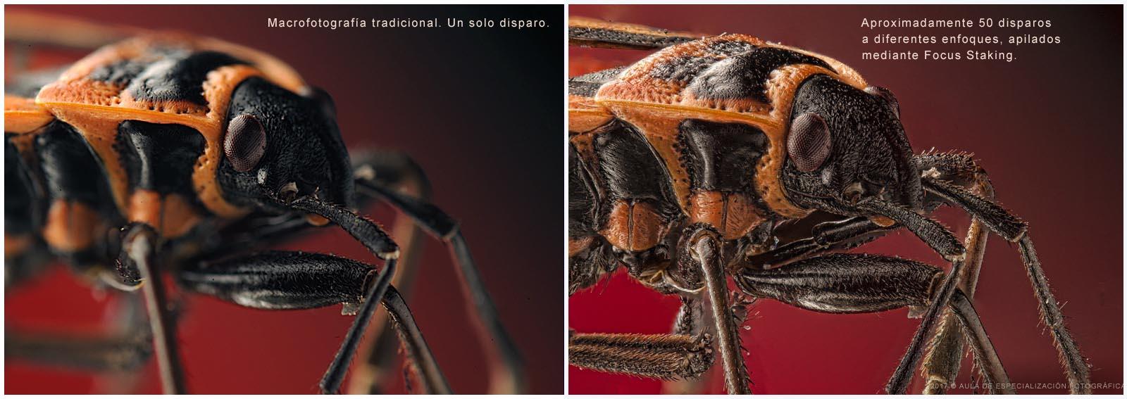 En la fotografía tradicional solo es posible enfocar un solo plano y cerrar diafragma para conseguir la mayor profundidad de campo, en cambio con el apilamiento de enfoque, Focus Stacking, se puede ver con mucha más nitidez a lo largo de todos los planos.