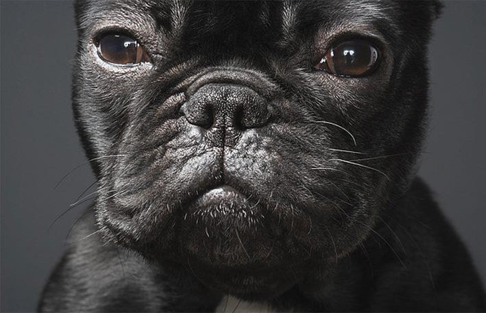 GRANDES FOTÓGRAFOS DE ANIMALES.TIM FLACH.