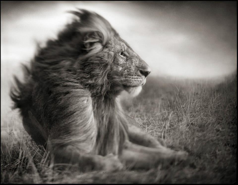 GRANDES FOTOGRAFOS DE ANIMALES.nICK bRANDT