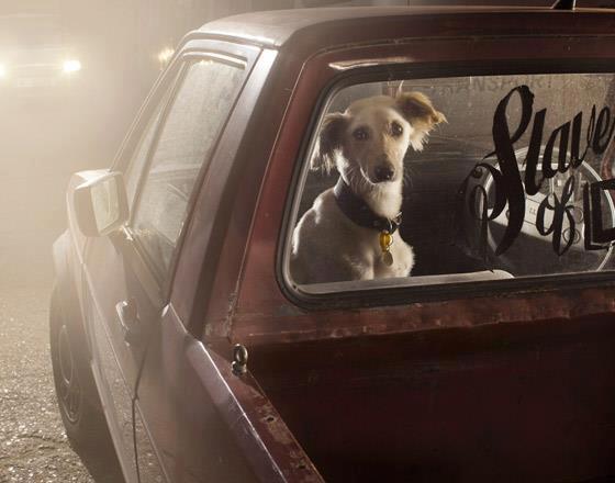 Grandes fotógrafos de animales. Martin Usborne