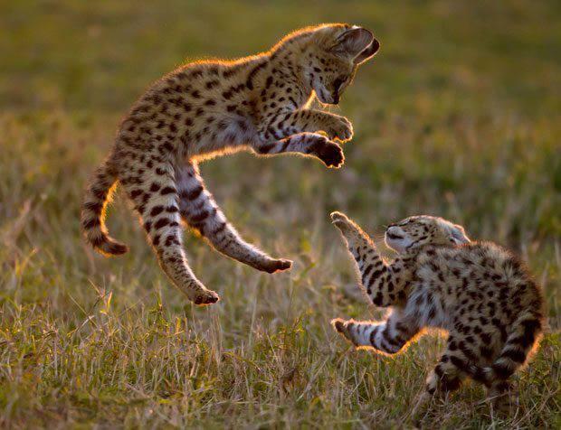 Grandes fotógrafos de animales. Paul Goldstein
