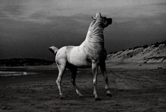 Grandes fotógrafos de animales. Shlomi Nissim