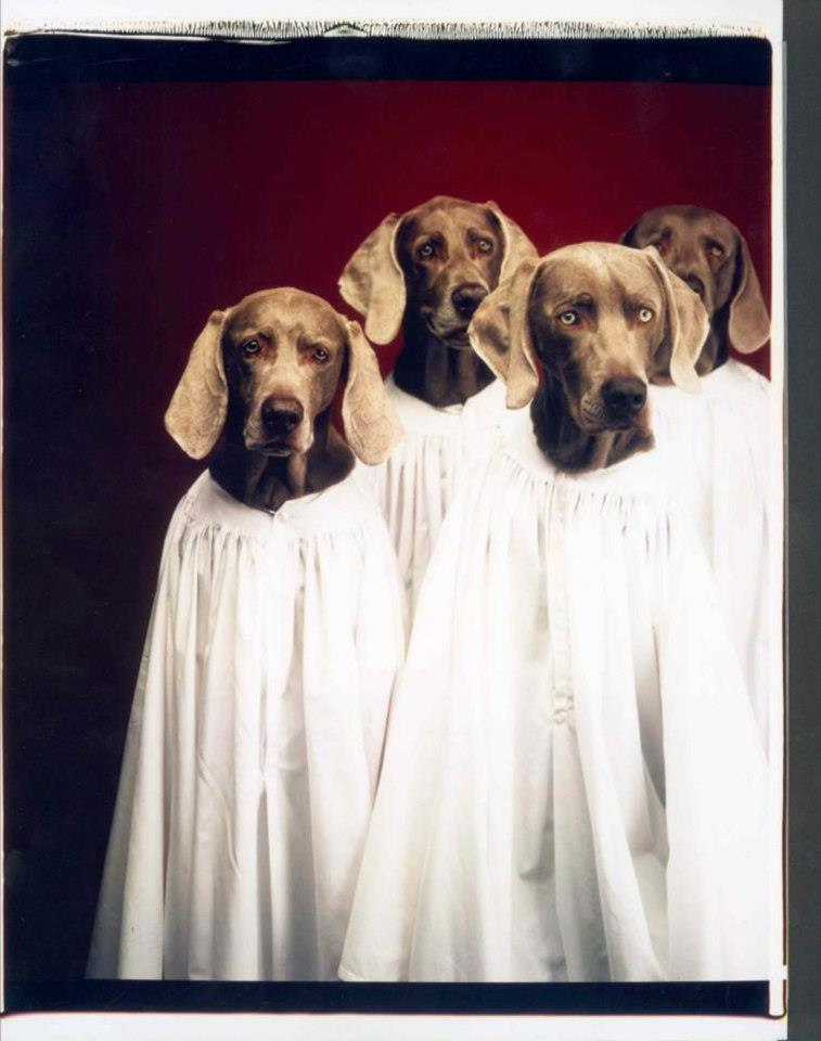 grandes-fotografos-con-humor-William Wegman