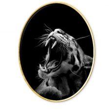 Fotografía de animales.