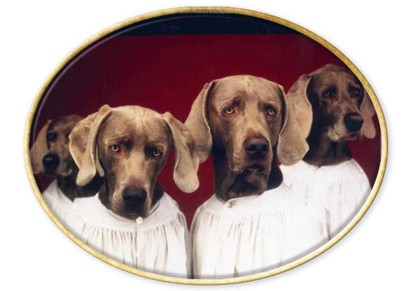Sentido del humor William Wegman. ANIMALES. HUMOR.
