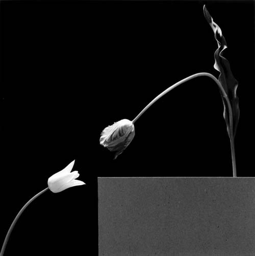 ©Robert Mapplethorpe