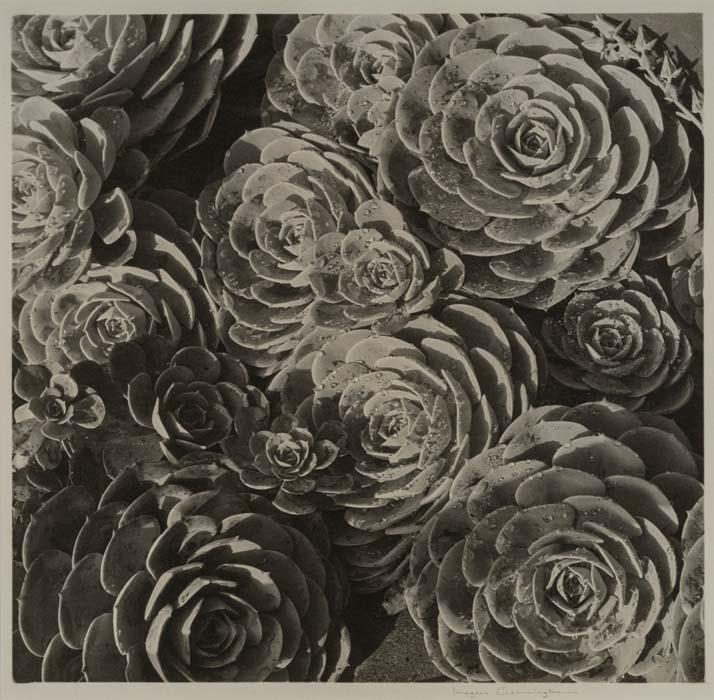 imogen-cunningham_hen-and-chickens_vers-1929_aware_women-artists_artistes-femmes-1500x1470